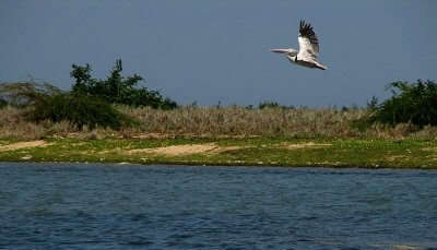 Pulicat Lake Bird Sanctuary,
