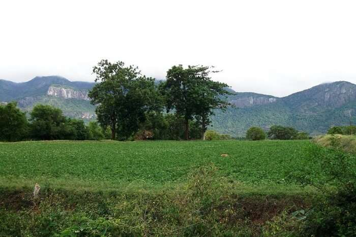 Where Kerala And Tamil Nadu Meet