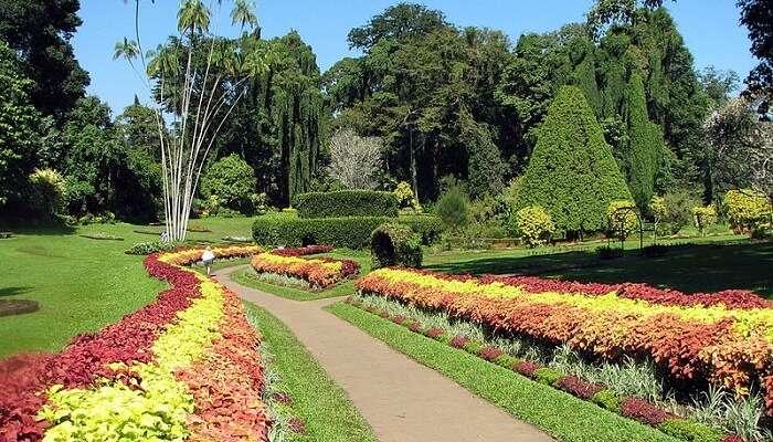 peradaniya gardens