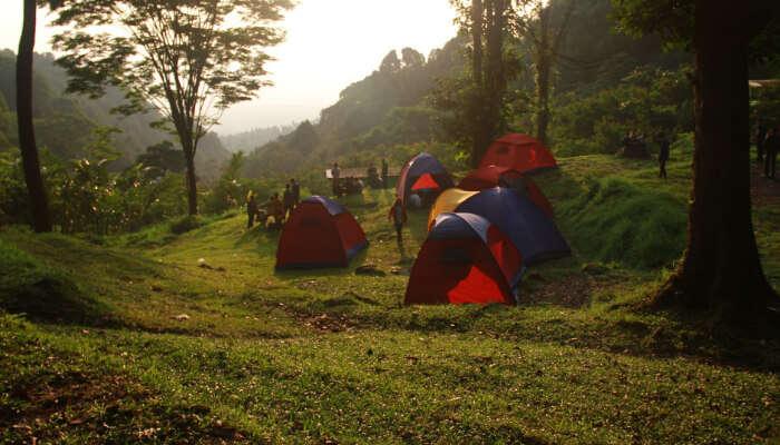 Camps in a Jungle