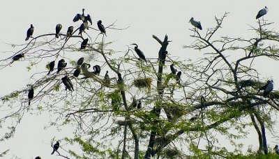 Chandra Shekhar Azad Bird Sanctuary