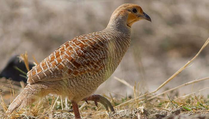 A rare bird specie of Rajasthan