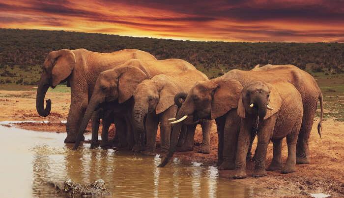 Playing Elephants