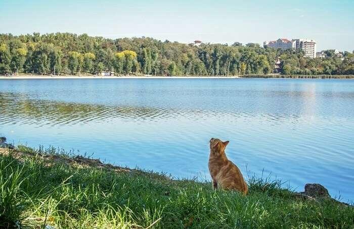 wild animal on the chisinau lake in national park of moldova