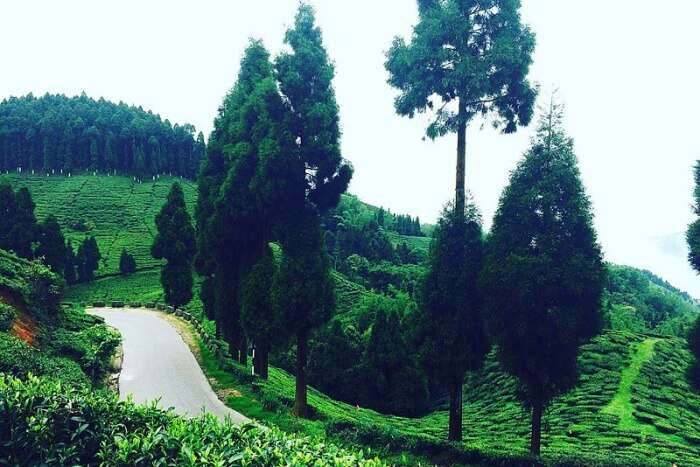 Basically Heaven With Tea Plantations