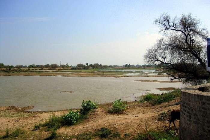 Hanumangarh Ghaggar river