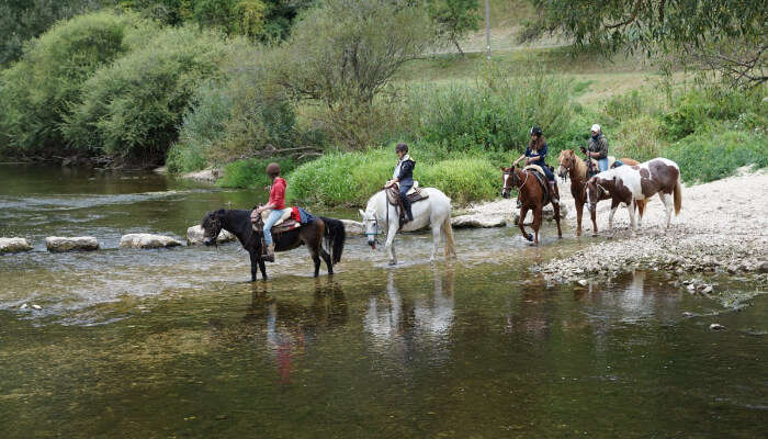 Some People Horse Riding Across a Stream