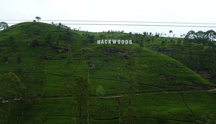 Mackwoods Labookellie Tea Factory