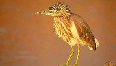 Najafgarh Drain Bird Sanctuary,