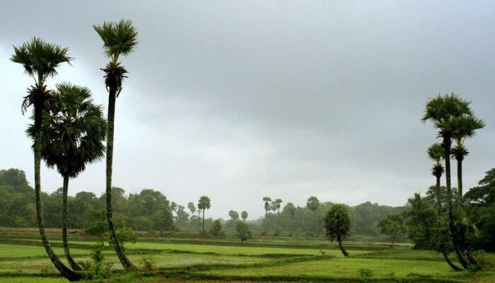 green field with palm trees