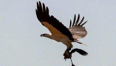 Samaspur Bird Sanctuary,