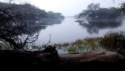 Sultanpur Bird Sanctuary,