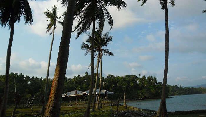 Viper Island