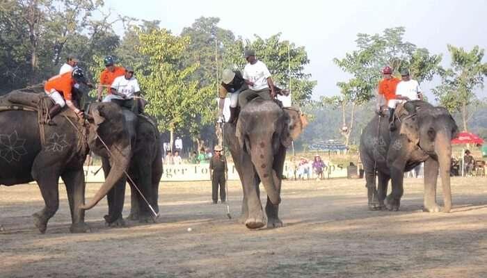 elephant polo jaipur