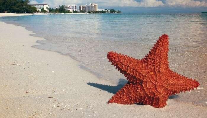 star fish in a beach