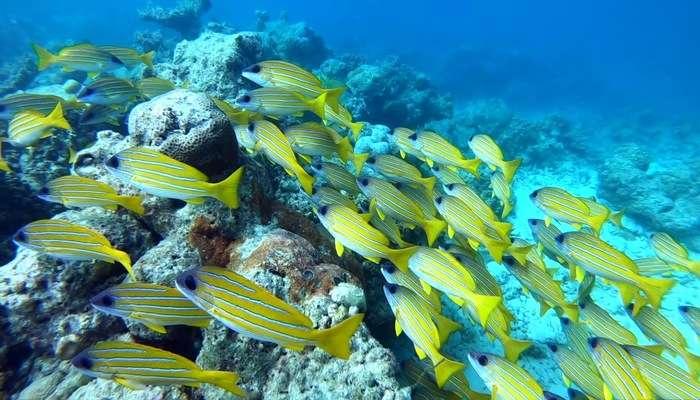Alimatha House Reef View