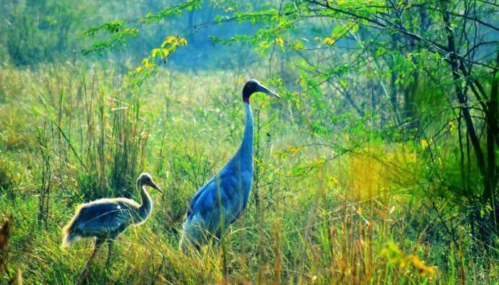 Bharatpur-Bird-Sanctuary_22nd oct