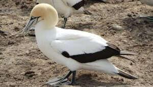 Cape Kidnapper Bird Watching