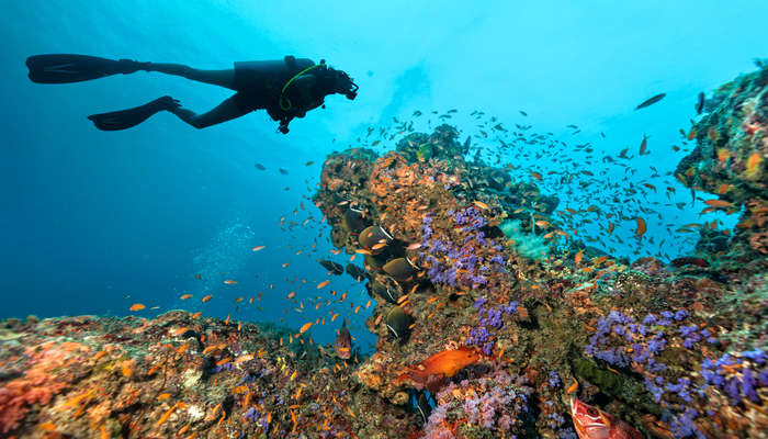 Best Maldives Scuba Diving