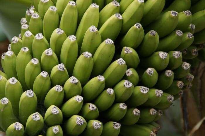 Shrub Bananas Close Banana Shrub Fruit