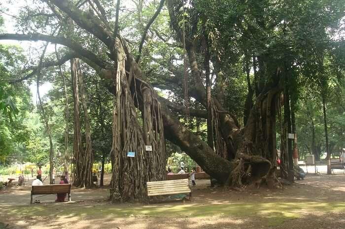 Gardens in Pune
