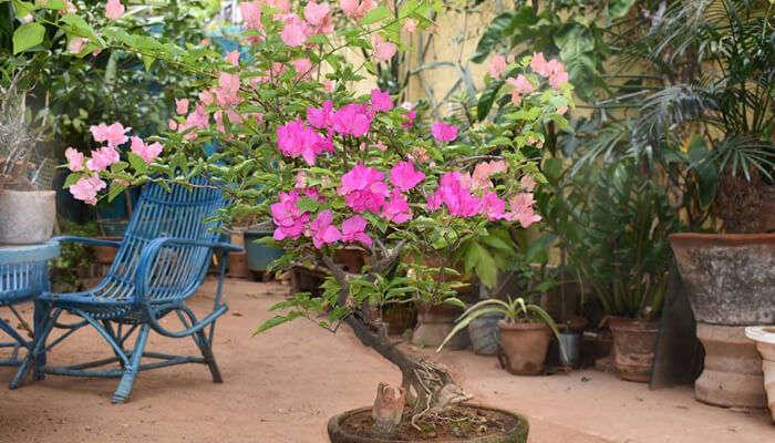 Ganesh Garden in Pondicherry