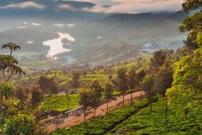 Honeymoon Resorts In Munnar