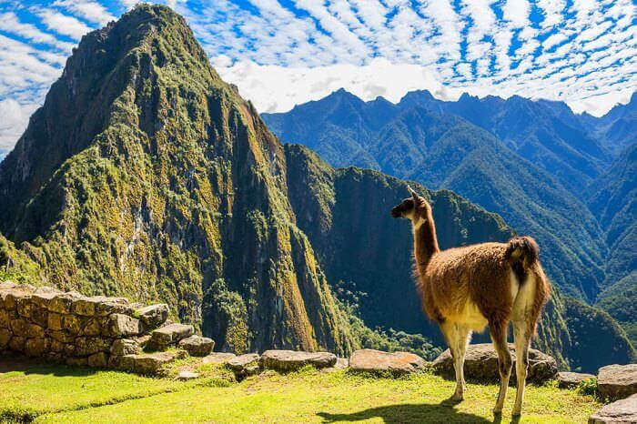 Huayna-Picchu_19th oct