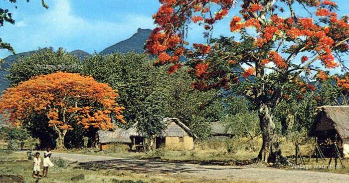 Pailles in Mauritius