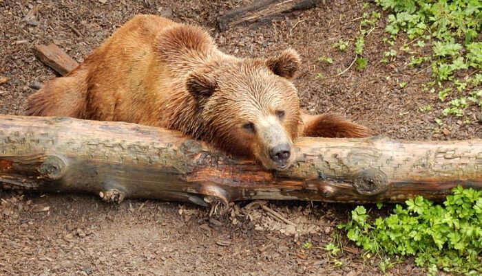 The Bear Park in Switzerland