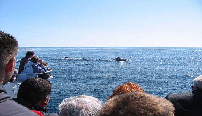 Whale Closeup View