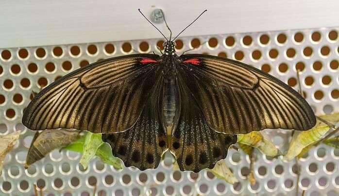 beautiful Butterflies here