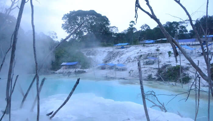 hot spring surrounded with trees