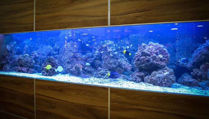 The Niagara Aquarium