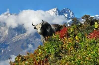 Himachal wildlife
