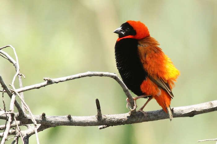 Austin Roberts Birds Sanctuary
