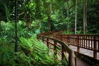 Bukit Timah Reserve
