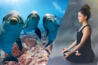 dolphines peeking through