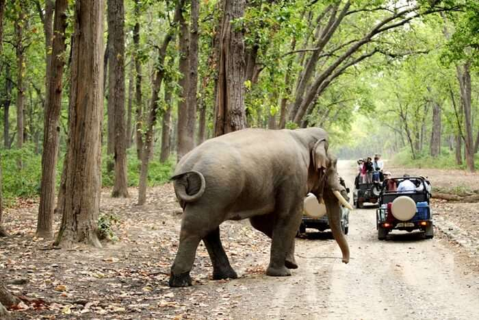 Jim Corbett National Park: A 2020 Handy Guide For All Nature Lovers!