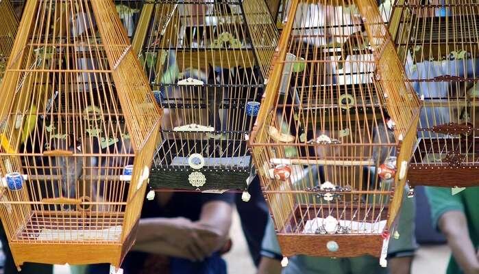Kebun Baru Bird Singing Club