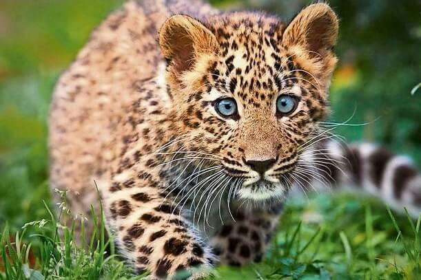 Rajaji Tiger Reserve And National Park