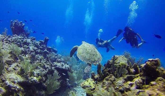 633 Sea Divers