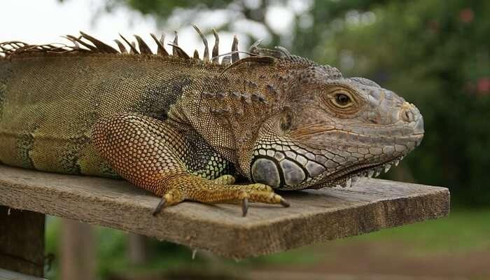 Bali Bird And Reptile Par
