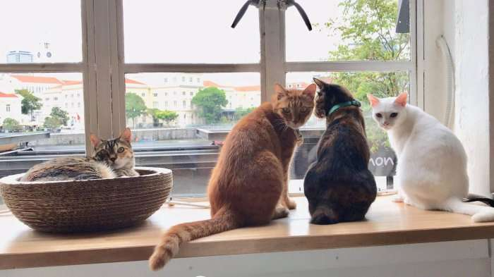 cats looking out of the window in a cafe