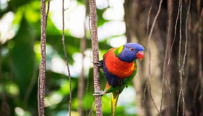 Awesome Ninoy Aquino Wildlife Park