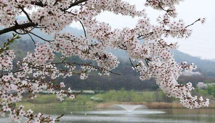 Season Quarter Nature Wood Cherry Tree