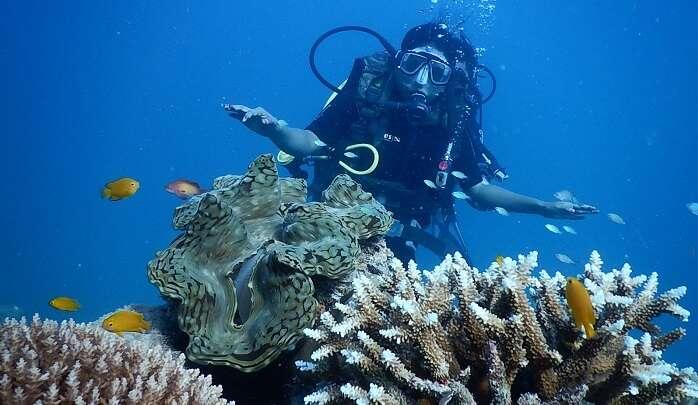 Neel Diving Institute