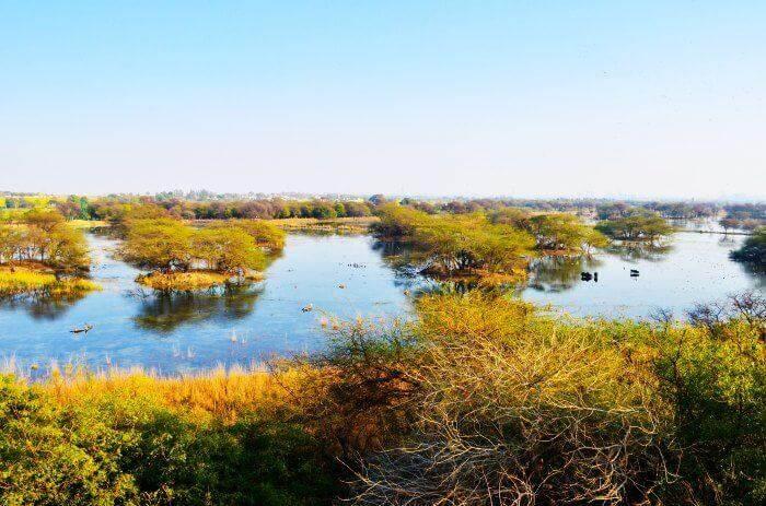 Sultanpur-Bird-Sanctuary_22th oct