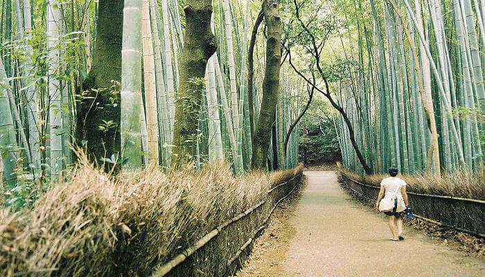 Arashiyama_Bamboo_Forest_