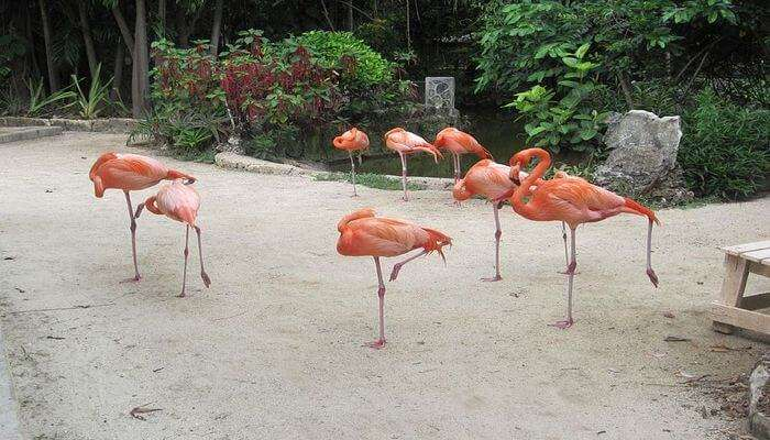 Ardastra_Gardens_Zoo_And_Conservation_Park_